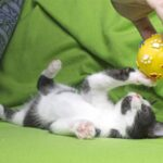 5 Amusing Kitty Games Your Cat Will Love