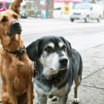 How To Protect Dog Paws From Hot Pavement
