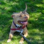 Why The Pet Nanny Chooses Positive Reinforcement Dog Training