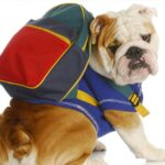 Back To School Time! Essential Skills To Teach Your Dog