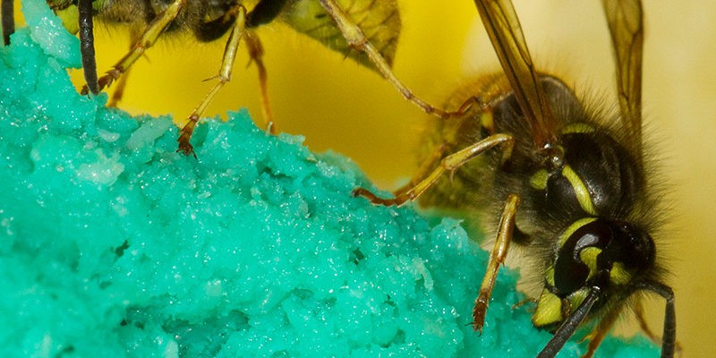 Wasps control services in surrey