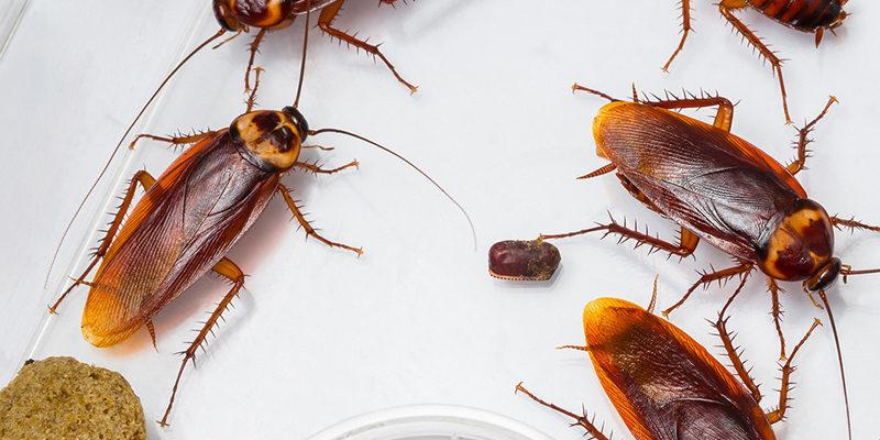 cockroach control services in surrey
