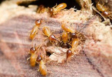 Termites pest control Surrey
