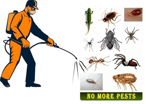 pest control Abbotsford