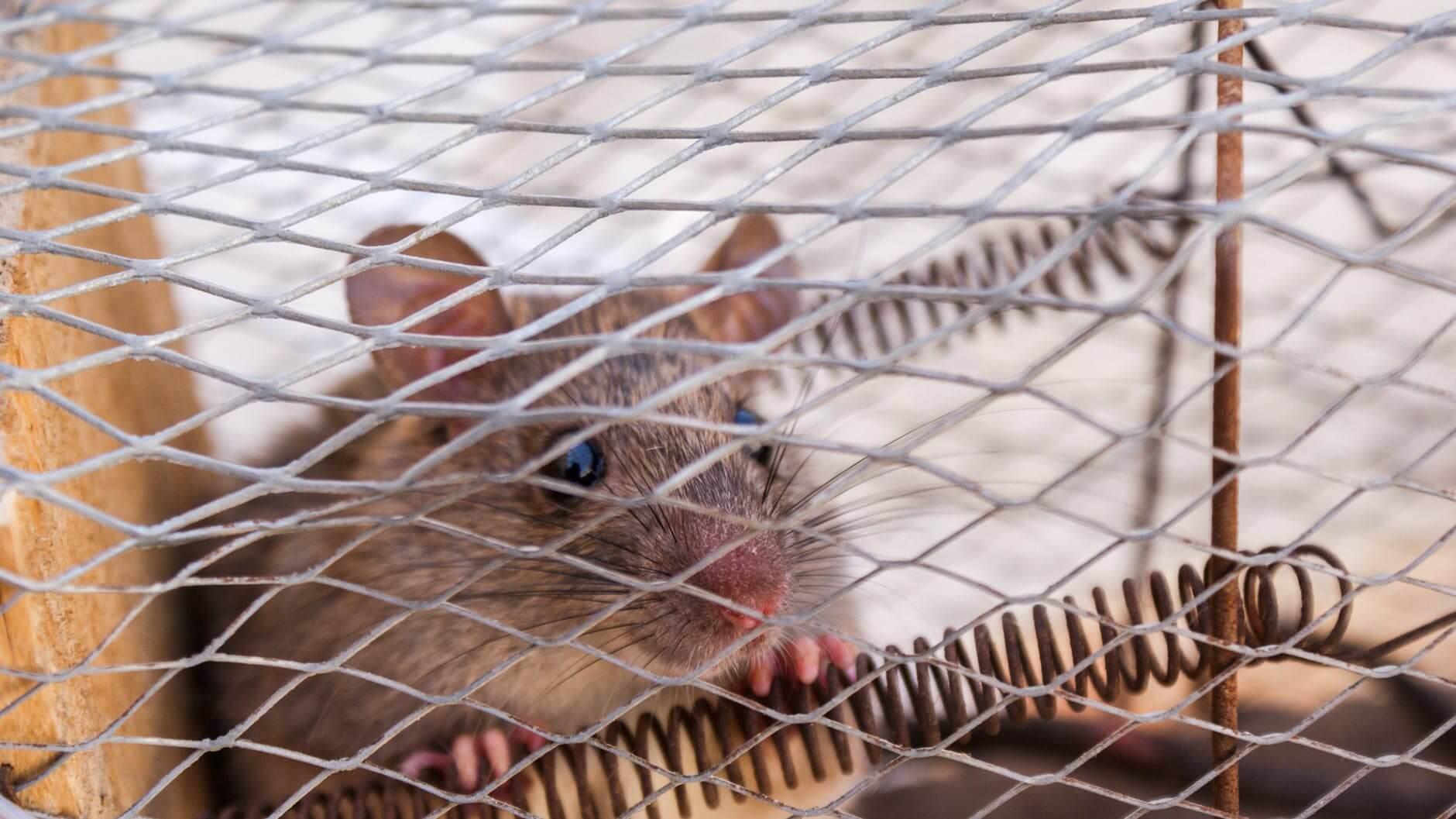 mice exterminator burnaby