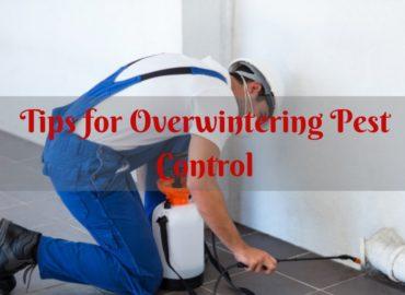 Pest Control surrey bc