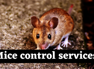 Mice Control New Westminster