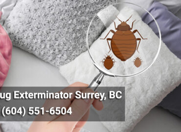 Bed Bug Exterminator Surrey, BC