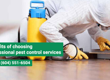 Benefits of choosing professional pest control services