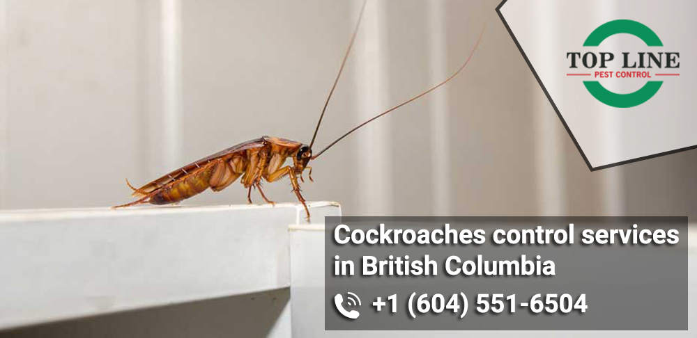 Cockroaches control services in British Columbia