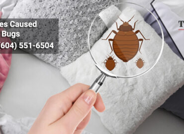 Diseases Caused by Bed Bugs