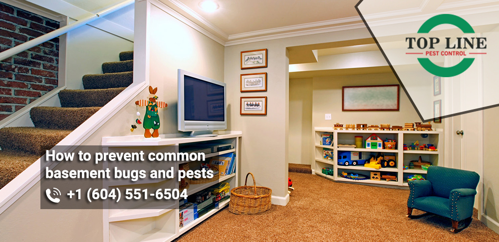 How to prevent common basement bugs and pests