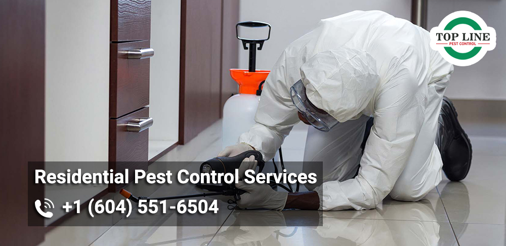 pest control in Burnaby