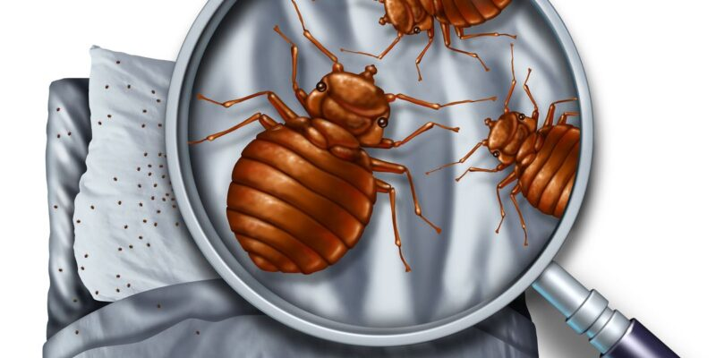 Protecting Your Home from Bed Bugs