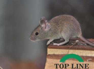 Remove Mice