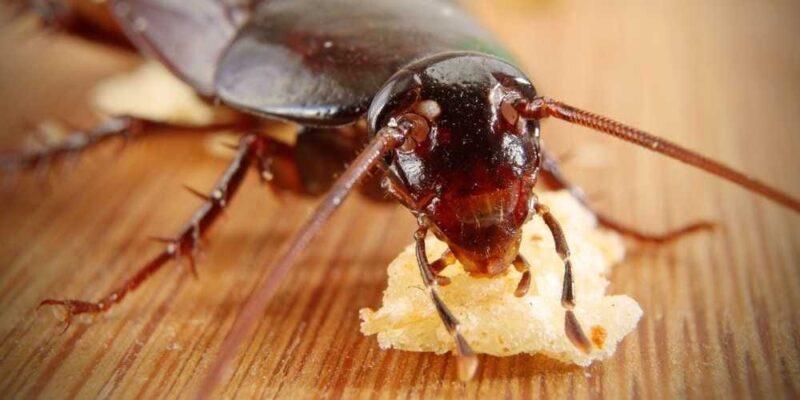 Squashing cockroaches