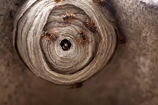 wasp removal surrey