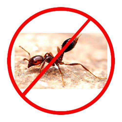 tips to avoid ants