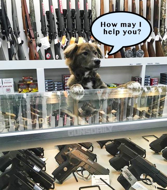 Contact Gun Appraiser