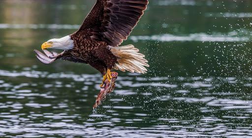 Ocean20Shores_Cold20Weather20Birds_eagle