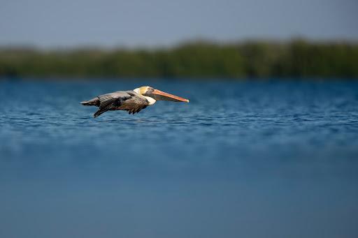 ocean-shores-birding