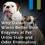 oxidation removing pet urine tains