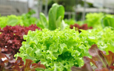 Plant Now to Enjoy Fall & Winter Crops
