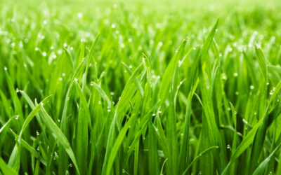 September is Prime for Lawn Care