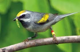 Bird-Friendly Gardening