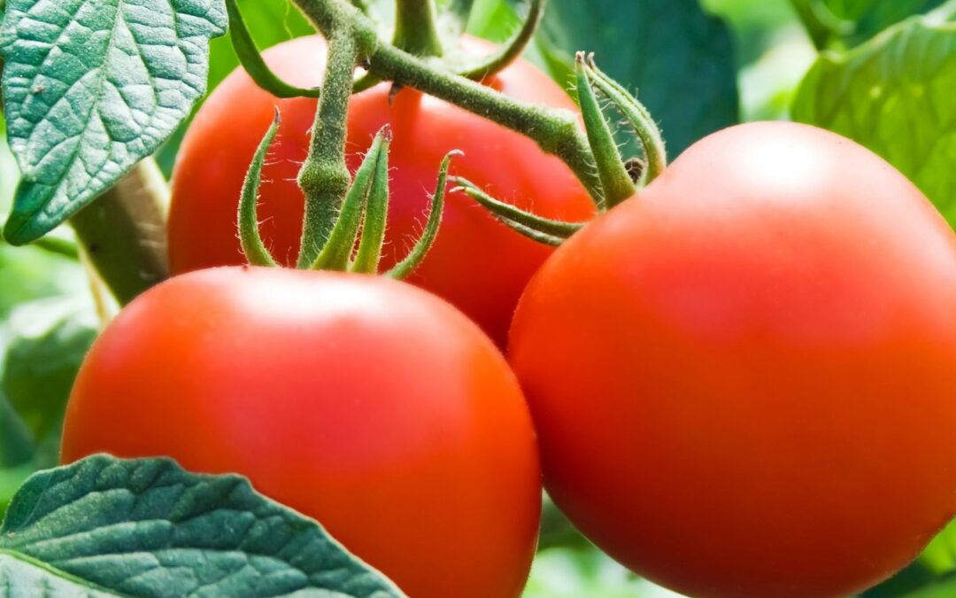 Warm Season Vegetable Gardening