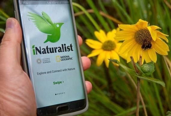 iNaturalist Tutorial