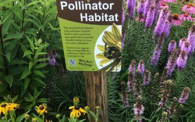 Plant a Pollinator Garden ZOOM Workshop