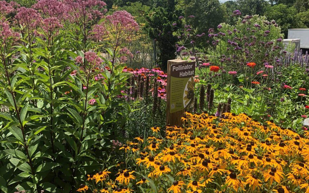 Pollinator Garden Tour