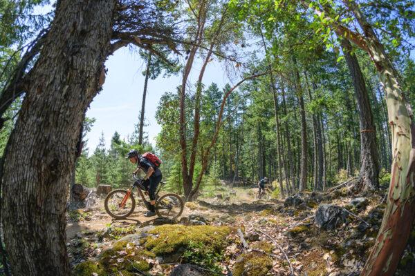 Cowichan Mountain Biking
