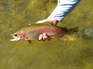 10/27/09 fishing report