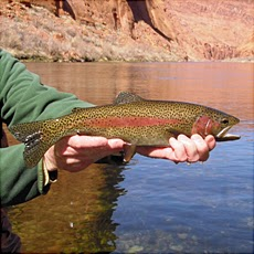 Tips for Fitting in on Your Lee's Ferry Fly Fishing Tour
