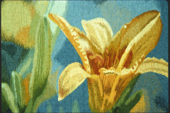 Daylilies-detail-1-STS1000px-150dpi