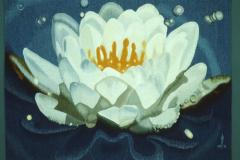 Waterlilies-STS1000px-150dpi