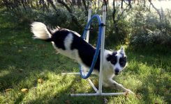 Dog Training and Choices