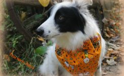 Fun Doggy Bandanas Great for Gifts