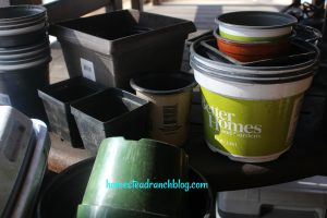 Containers planting