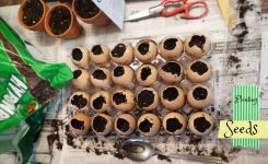 8 DIY Ways to Start Seedlings!
