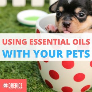 Using essential oils with Pets