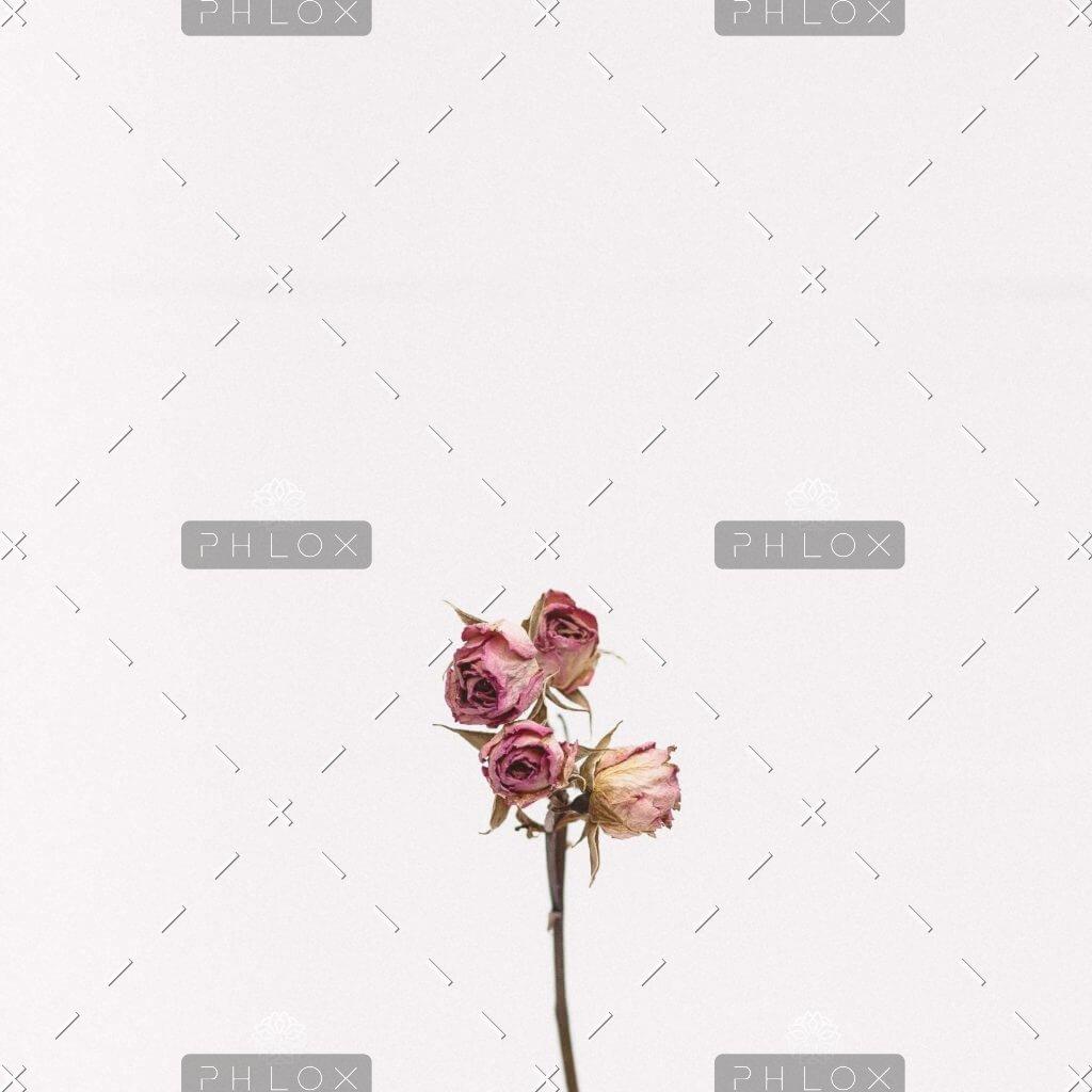 demo-attachment-1111-tanalee-youngblood-fsdWYNTymjI-unsplash-1024x1024