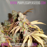 Purple-Cookies