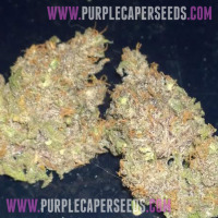 Purple Pineapple OG