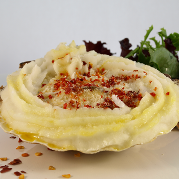 Coquille St Jacques