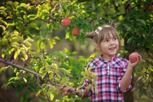 How do you entertain kids on a Winter Weekend? The secret is…..fruit picking!