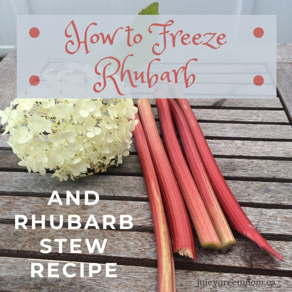 How to Freeze Rhubarb and Rhubarb Stew Recipe juicygreenmom