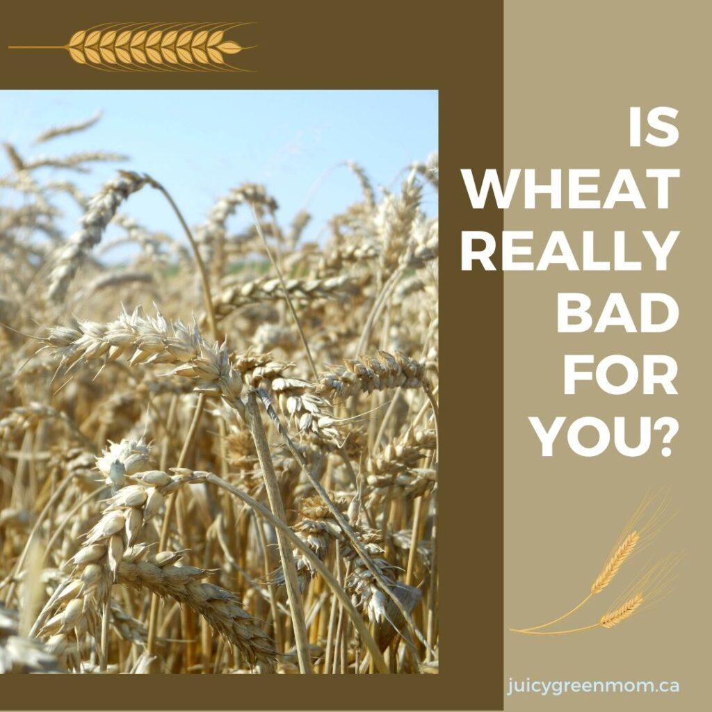 is wheat really bad for you juicygreenmom